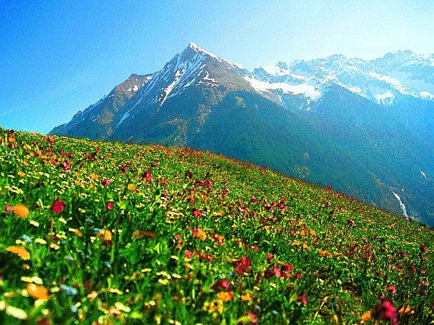 Alpine meadow in Austria