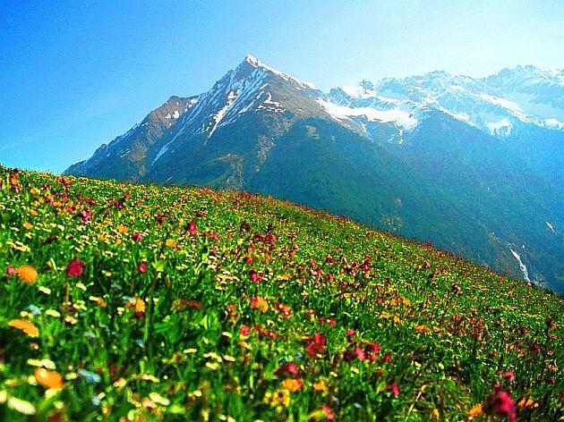 Alpine meadow in Austria