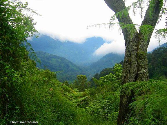 Rwenzori Rainforest